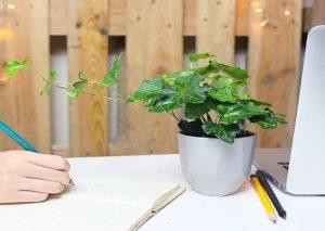 Tại sao nên dùng cây để bàn làm việc trong văn phòng?