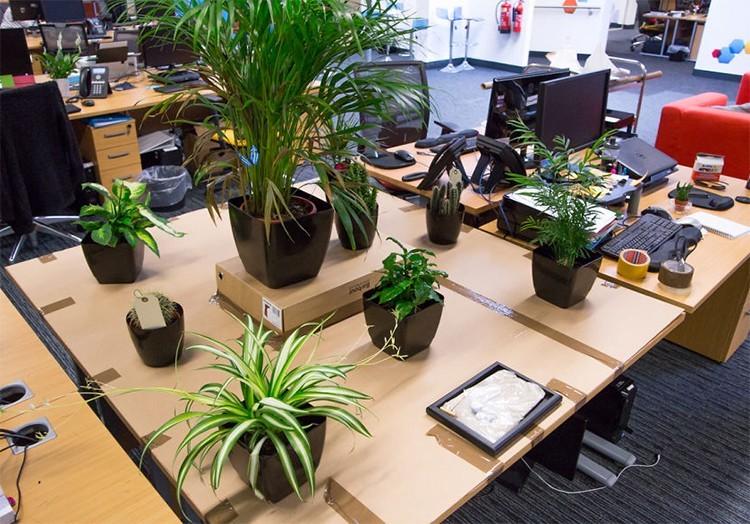cây để bàn làm việc, Tại sao nên dùng cây để bàn làm việc trong văn phòng?