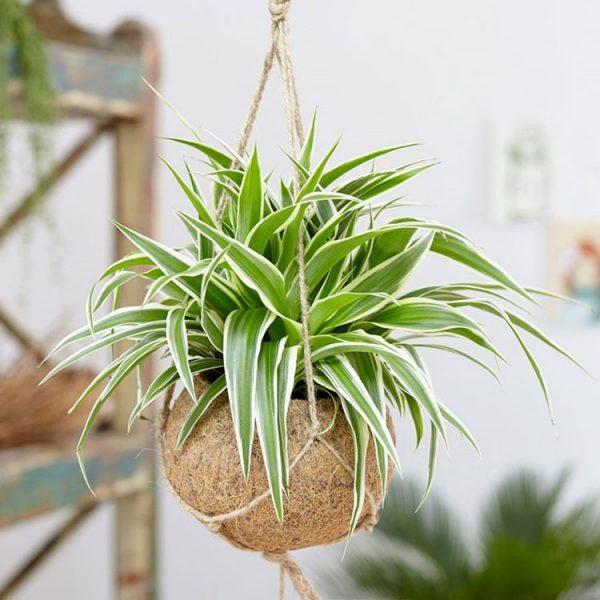 cây trồng trong phòng ngủ, Bí mật cách chọn cây trồng trong phòng ngủ để luôn có một giấc ngủ ngon