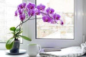 Tết chưng hoa gì may mắn để cả năm tài lộc dồi dào