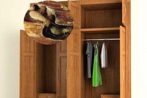 Bí quyết sử dụng và bảo quản tủ đựng quần áo gỗ luôn bền đẹp
